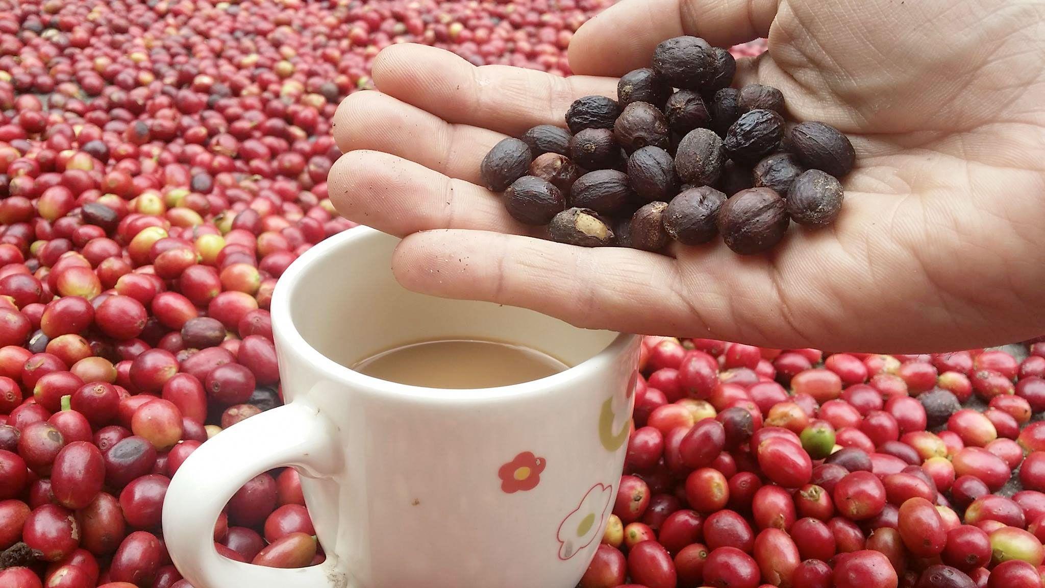 el-cafe,lo-quieres-o-lo-necesitas