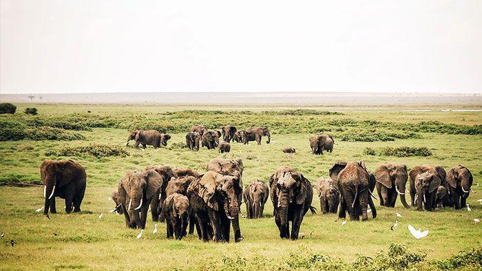 elefantes-en-libertad